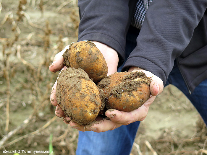 Potatoes-from-Downey-Farms