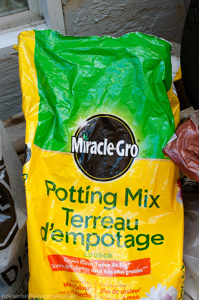 Miracle Grow Potting Mix | InSearchOfYummyness.com